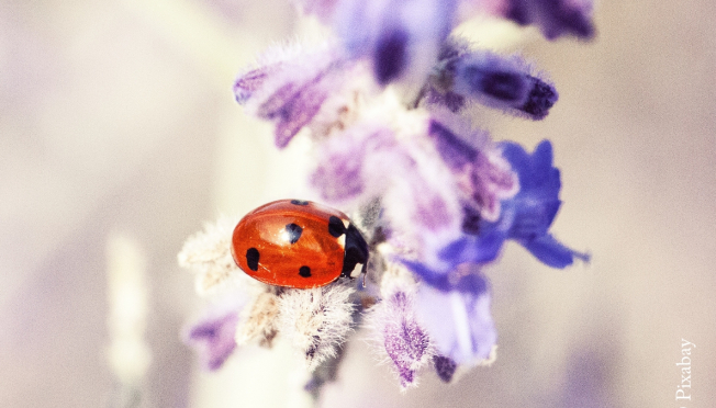 "Concours photo ""insectes"""